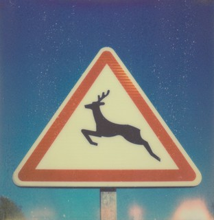 Deer Crossing | by jakem