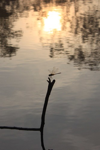 sunset india nature water insect