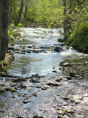 sunshine yay rapids bellavista ripples springishere tanyardcreek greenbuds