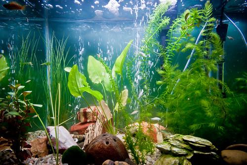 fish tank | by threephin