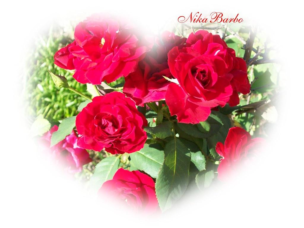 Desejo Um Lindo E Feliz Dia Das Maes A Todas Mamaes Do Bra Flickr