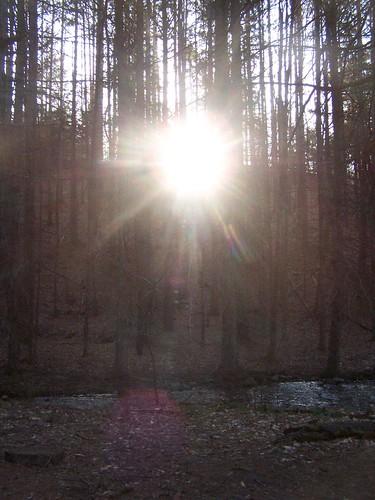 forest sunrise state andyarthur burntrossman
