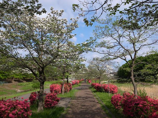 <p>a)桜が終わるとはなみずき</p>