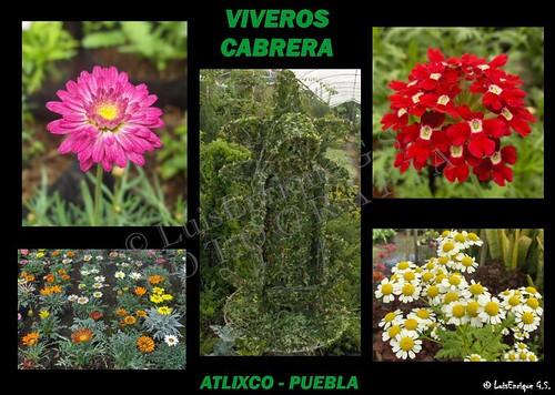 Viveros Cabrera - Atlixco - Puebla - México