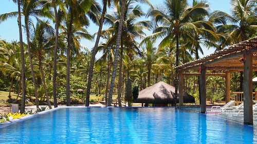Infinity Pool surrounded by Palms   by Green Roots Travel