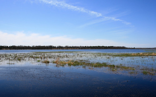 wetland wi wisconsin nationalwildliferefuge necedah nwr refuge publicland
