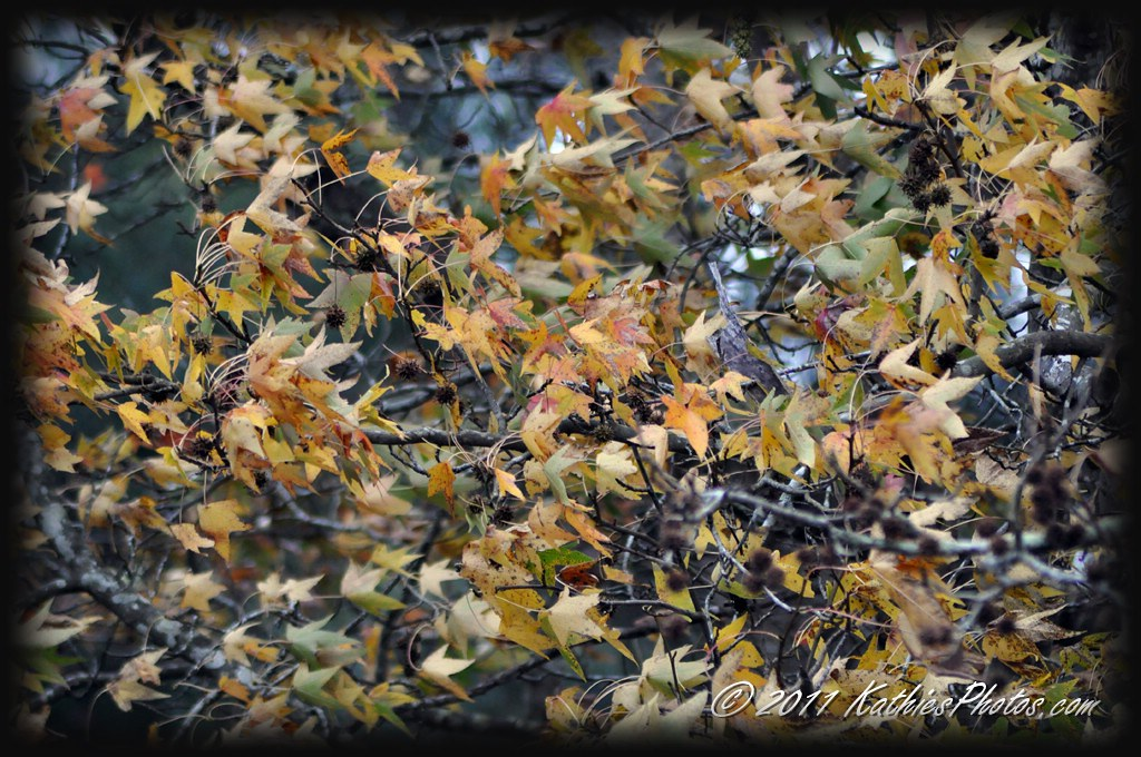 172 365 Leaves Blowing In The Wind Windy Day Kathie Thomas Flickr