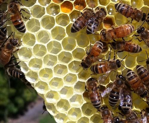 Bee eggs   by Jordan