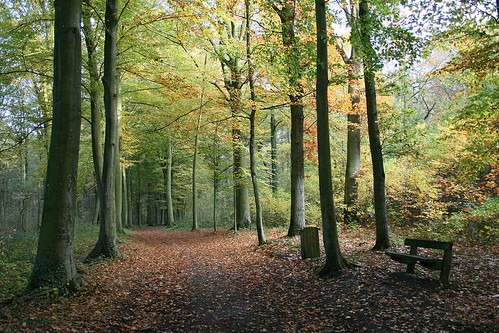 belgium belgique mons havréhainaut belgiqueenimage arbre automne nature saisons sentierreliantlaruedesphosphatesàlavenuedelachapelle belgiqueenimages jpghavré havrébelgique