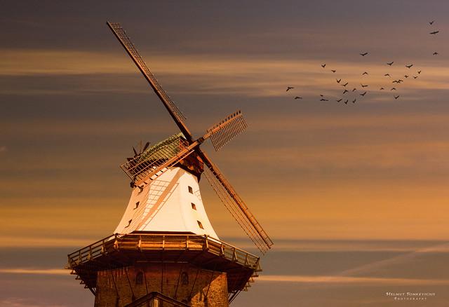 Mühle Amanda in Kappeln.jpg