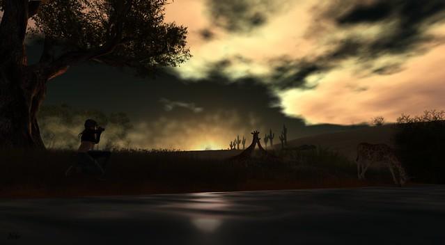 dawn of the safari ...