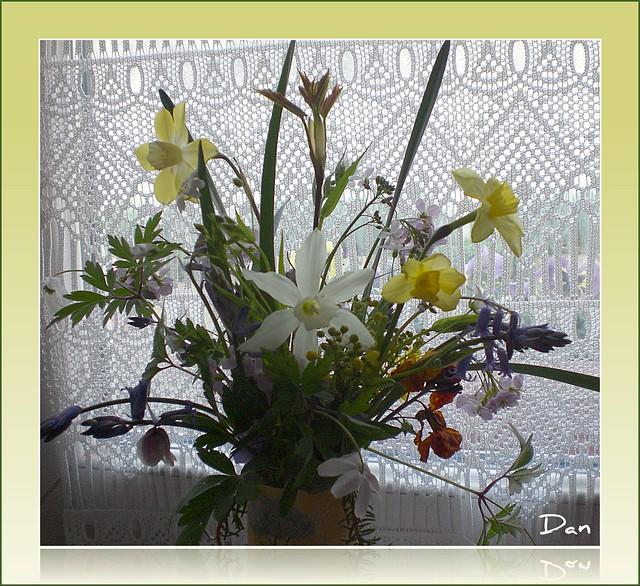 Fleurs des bois et du jardinet...