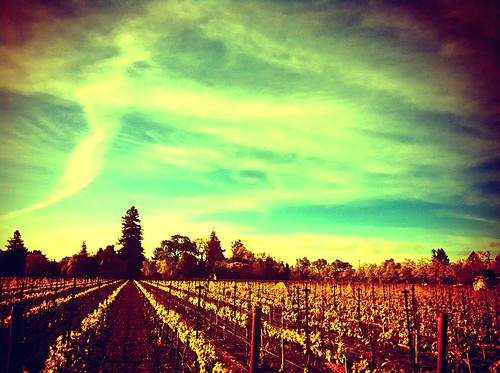 california travel viaje sky sun apple beautiful clouds sunrise hotel vineyard holga wine valley nubes napa vacations vacaciones hdr camerabag app winecountry vino iphone laresidence iphone4 viñedos