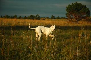 El gran cazador blanco del pampa | by pikabooga