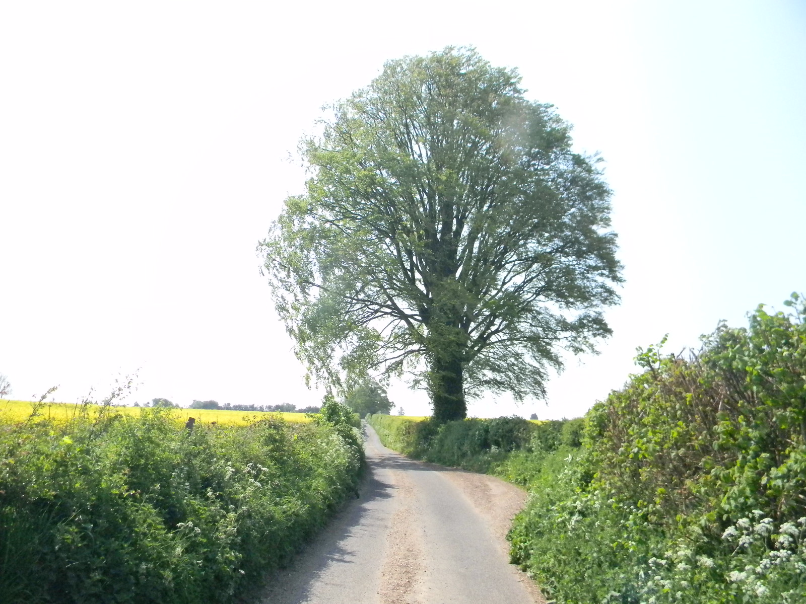 Country Road Overton Circular
