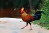 Birds of Sri Lanka , Species No 92 by Sara-D