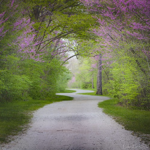 park flower tree leaves evening blossom walk trail redbud maumeeriver toledoareametroparks watervilleohio farnsworthmetropark