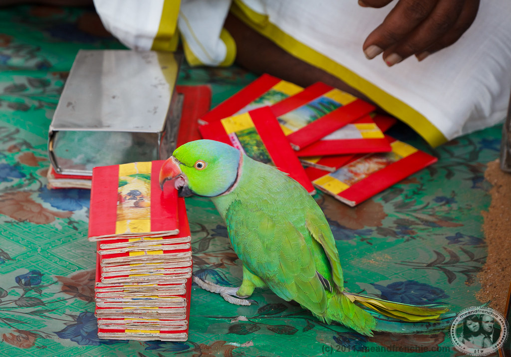 Image result for parrot picking cards