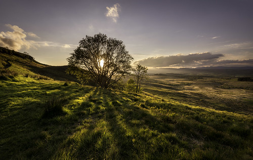 sunset tree scotland day cloudy queensview kilpatrickhills auchinedenhill nikond800 nikonafsnikkor1635mm14gedvr