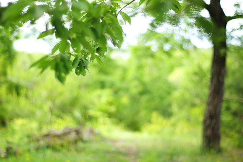 森へ | by けんたま/KENTAMA