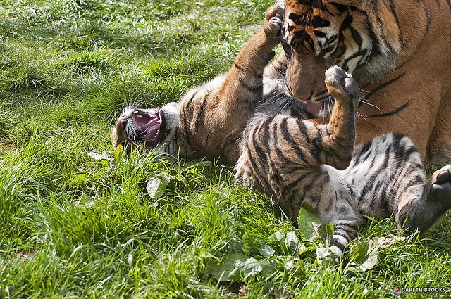 Stop! That tickles!