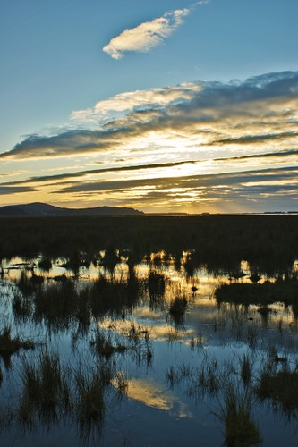 sunset david wales reflecting sundown dusk elder gower marsh alexander llanrhidian colorphotoaward rememberthatmomentlevel1 rememberthatmomentlevel2