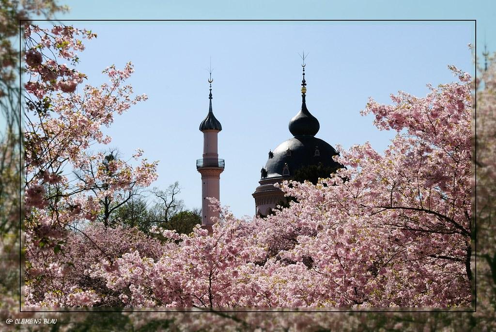 Foto Foto Pemandangan Bunga Sakura Jepang 3 Sakura ʃƪ