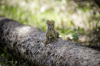 Survivor Squirrel | by Kurayba