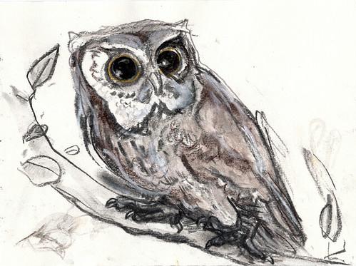 Little brown owl