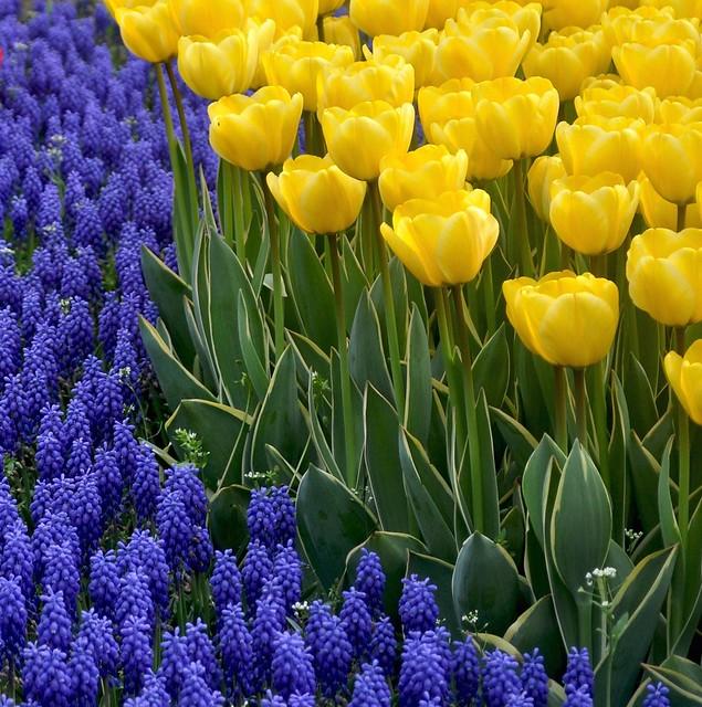 tulip time in Istanbul