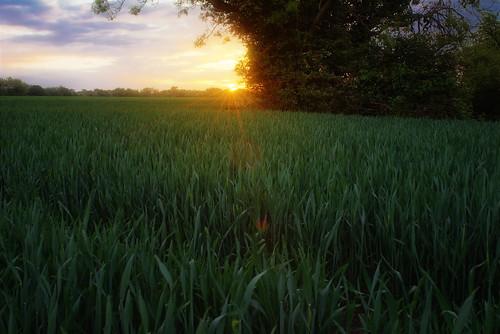 uk england sunrise countryside essex nikond600 sigma35mmf14dghsm
