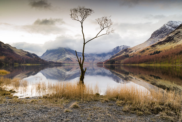 The lovely Buttermere tree