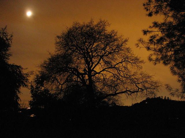 Oak Tree at Night