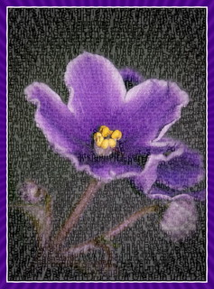 Text A Violet