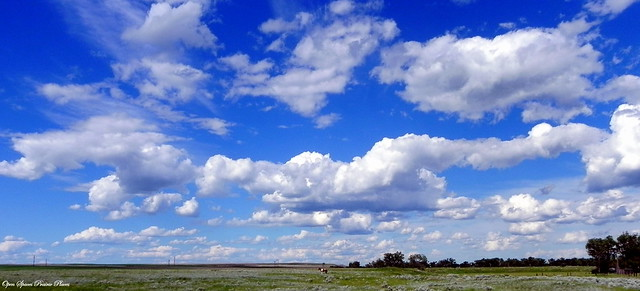 Little Horse Under the Big Montana Sky, Frazer, MT