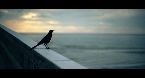 sunset usa cinema green bird beach pier florida widescreen border wide frame bleak cinematic raven rabe steg fortmyers 2351 nikkor50mmf12 nikond700