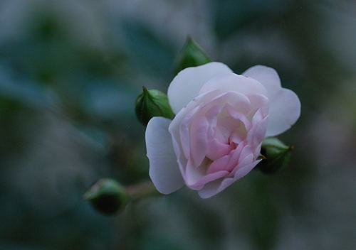 Zakros - Blumenschoenheit am Strassenrand
