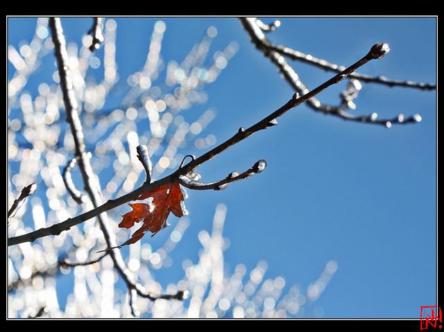 Des arbres de cristal