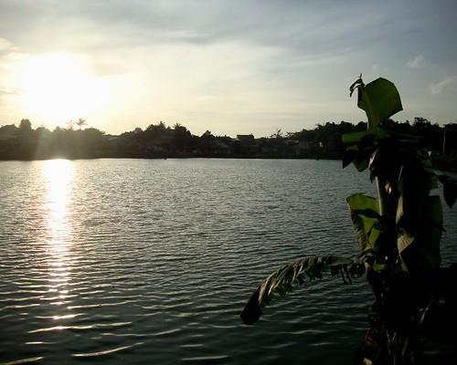 sunset sun lake plant challenge