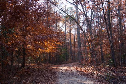 autumn trees usa virginia path pocahontasstatepark