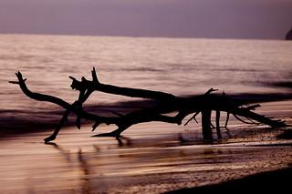 Lanikai Driftwood 2