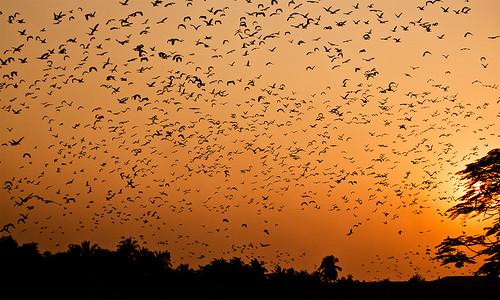 sunset sky birds canon evening westbengal canon500d jhill santragachhi colorphotoaward impressedbeauty 55250is rubyphotographer souvikmaitra