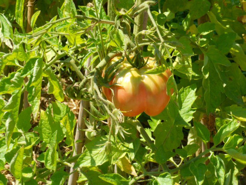 ¿Quieres cultivar un huerto en tu terraza?
