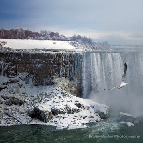 blue winter cold bird ice nature water landscape niagarafalls seagull waterfalls selectbestexcellence sbfmasterpiece