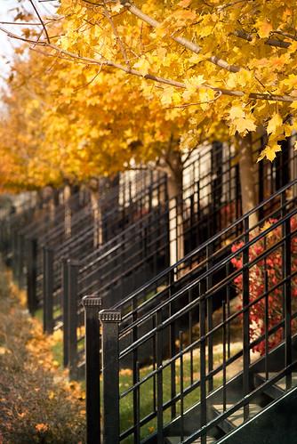 autumn sunlight fallcolor elginil mapleleaves townhomes downtownliving nikond200 wroughtironrailings alittletexture alongthefoxriver warmurbanvibe