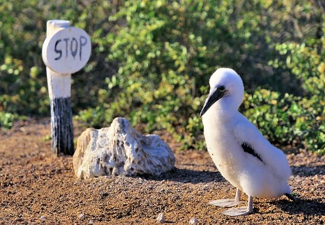 Galapagos, don't overstep!