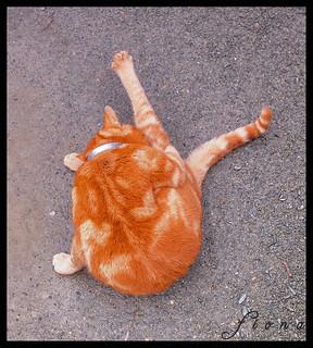 Harlech Cat does Yoga!