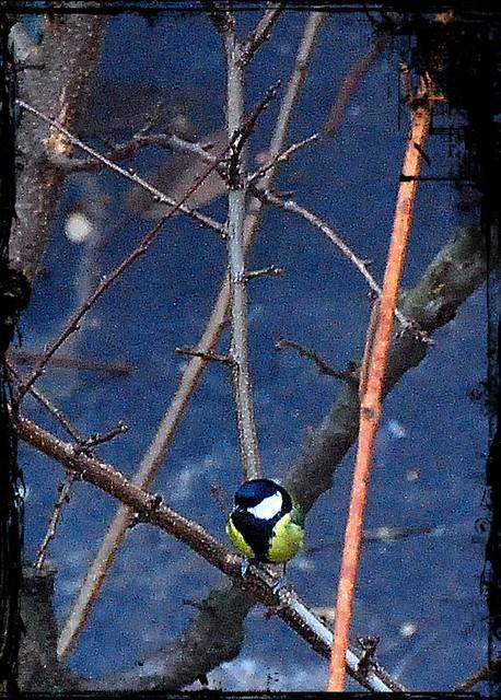18 - 30 décembre 2010 Maisons-Alfort Par ma fenêtre Mésange