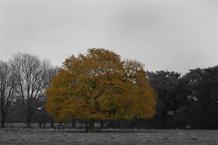 clour pop winter oak throop