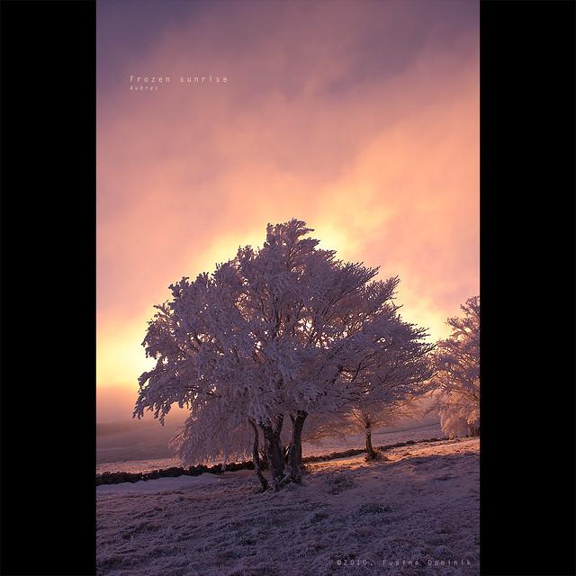 Frozen sunrise / Fire tree